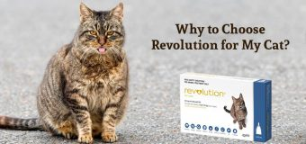 Why to Choose Revolution for My Cat?
