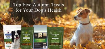 Top Five Autumn Treats for Your Dog's Health