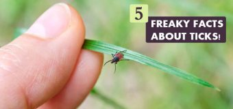 5 Freaky Facts about Ticks!