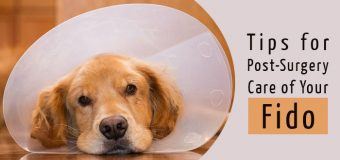 Tips for Post-Surgery Care of Your Fido