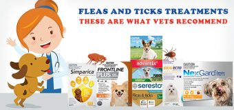 Fleas and Ticks Treatments – These Are What Vets Recommend