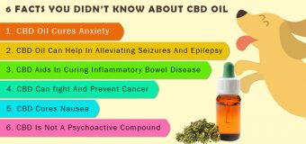 6 FACTS YOU DIDN'T KNOW ABOUT CBD OIL