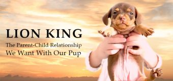 Lion King: The Parent-Child Relationship We Want With Our Pup