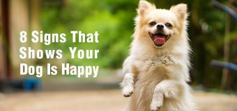 8 Signs That Shows Your Dog Is Happy
