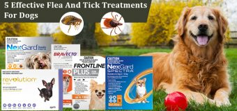 5 Vet Recommended Flea and Tick Treatments for Dogs
