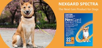 Nexgard Spectra Review – The Next Gen Product for Dogs
