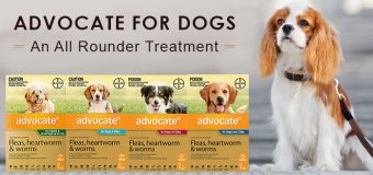 Advocate Review – An All Rounder Treatment for Dogs