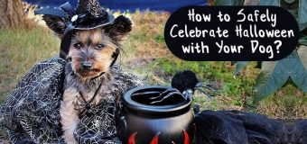How to Safely Celebrate Halloween with Your Dog?