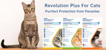 Revolution Plus For Cats – A Vet Recommended Preventative Treatment