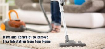 Ways and Remedies to Remove Flea Infestation from Your Home