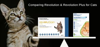 Comparing Revolution and Revolution Plus for Cats