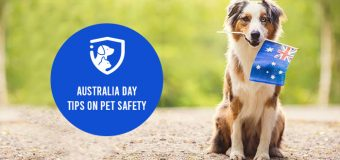 Australia Day: Tips on Pet Safety