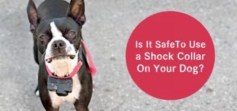 Is It Safe To Use a Shock Collar On Your Dog?