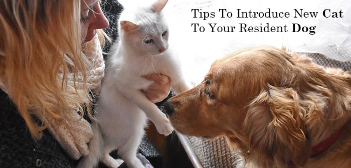 Tips to introduce new cat to your resident dog
