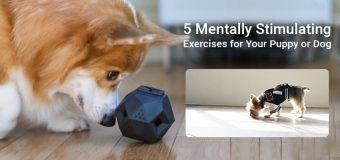 Mentally Stimulating Exercises for Your Dog During COVID-19
