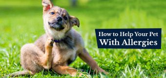 How to Help Your Pet With Allergies