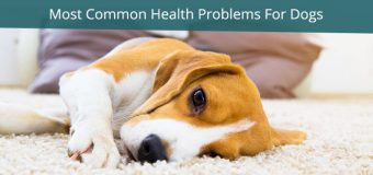 6 Most Common Health Problems For Dogs