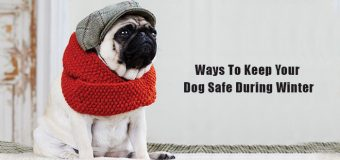 Ways To Keep Your Dog Safe During Winter
