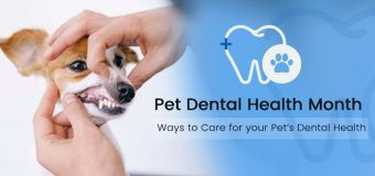 Pet Dental Health Month – Ways to Care for your Pet's Dental Health