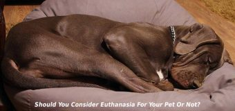 Should You Consider Euthanasia For Your Pet Or Not?