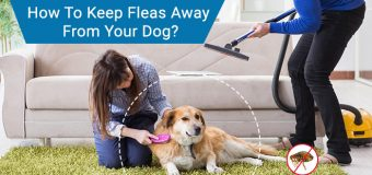 How To Keep Fleas Away From Your Dog?