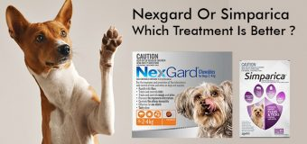 Nexgard Or Simparica – Which Treatment Is Better?