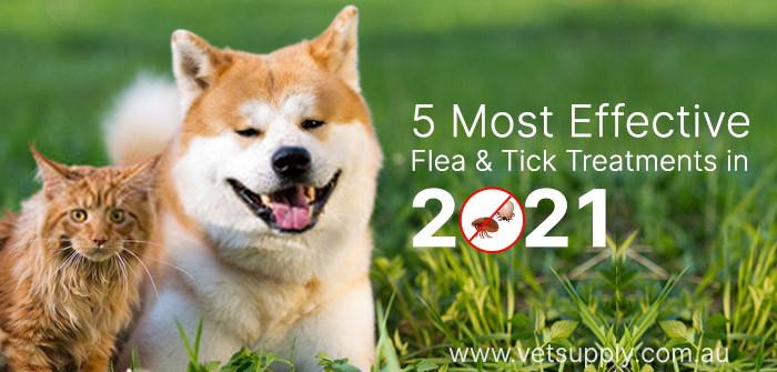 most effective flea and tick treatment in 2021