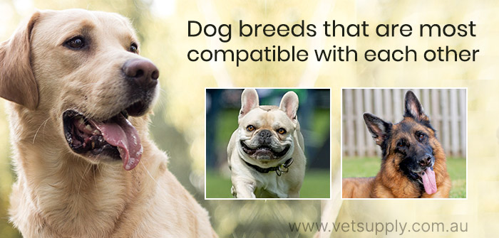 dogs breed that are most compatible with each other