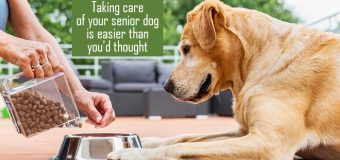 Taking care of your senior dog is easier than you'd thought