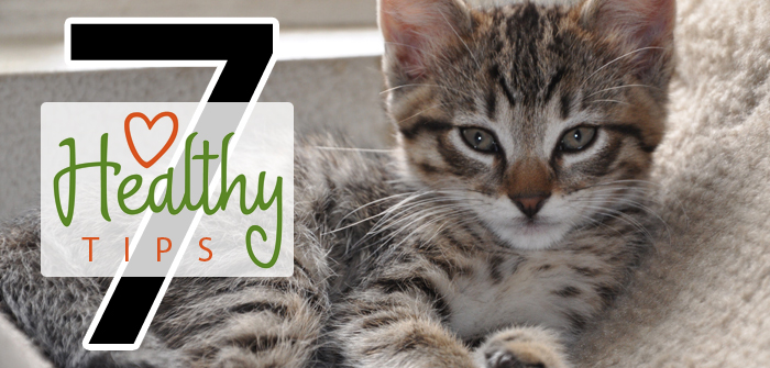 Tips to Keep your Tabby Healthy & Happy