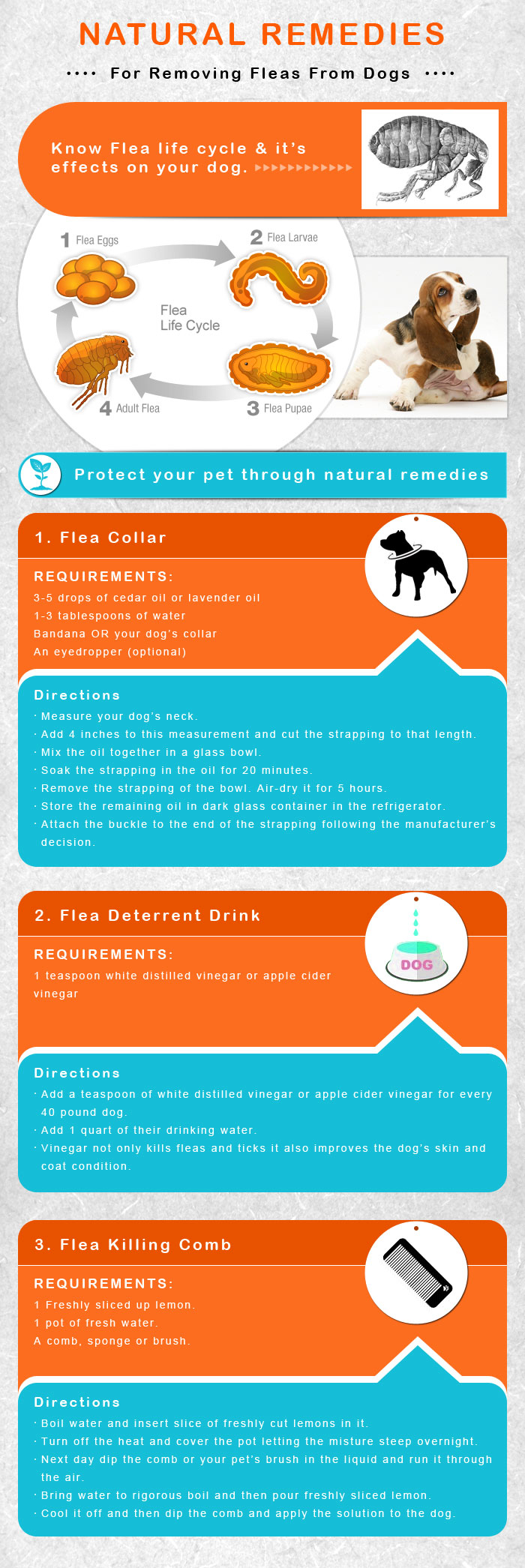 Flea & Tick Control and Prevention Products for Dogs
