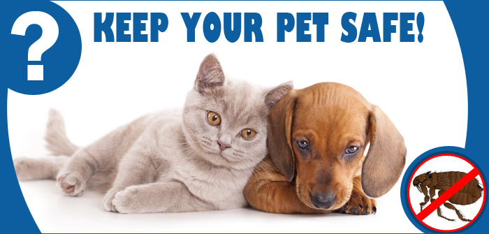 Flea and Tick Treatment for pets