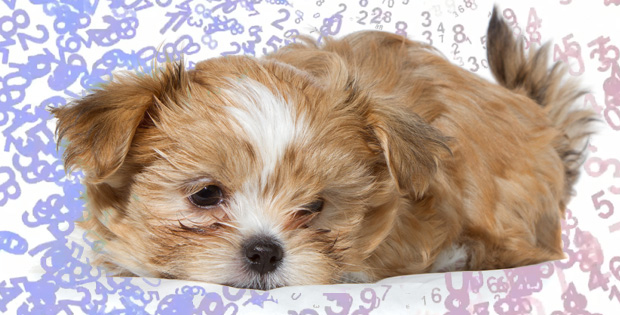 Best Pet Food For Your Dog