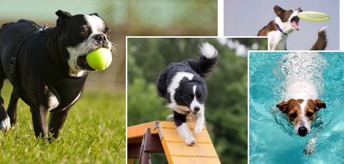 3 Mind-blowing Dog Walking Alternatives
