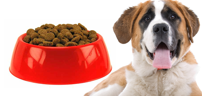 food options for dogs