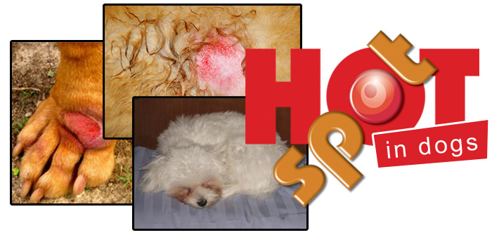 Hot Spots in dogs