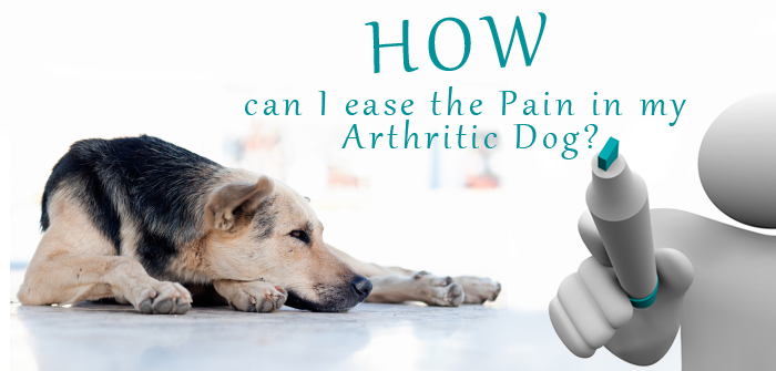 Relieving the Pain in Arthritic Dogs