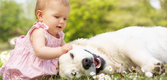 Tips For Prepare Your Dog for the Newborn