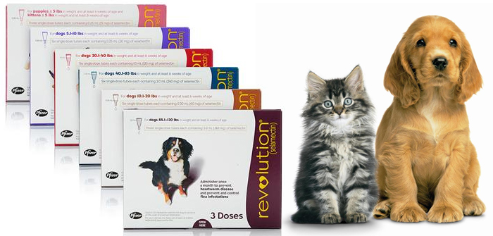 Revolution for Cats and Dogs