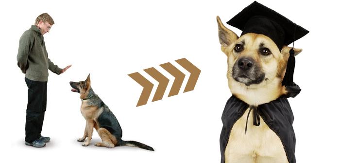 Pet Dog Training