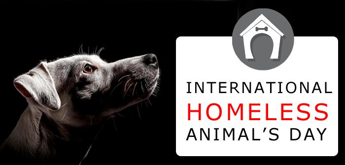 International Homeless Animals Day 2015