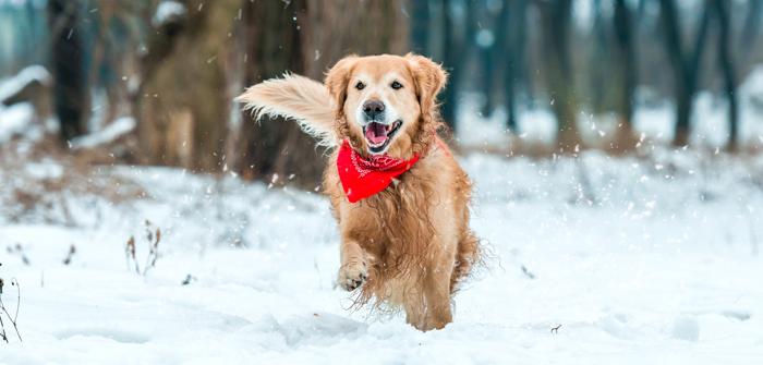 Winter Dog & Cat Care