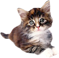 Shop for Cat Foods for Kittens