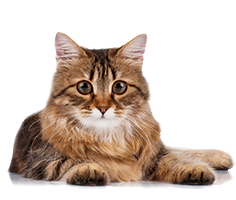 Shop for Cat Foods for Senior Cats