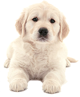 Shop for Dog Foods for Pupppies