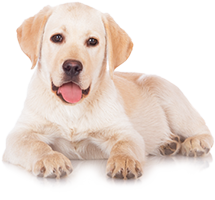 Shop for Dog Foods for Adult Dogs
